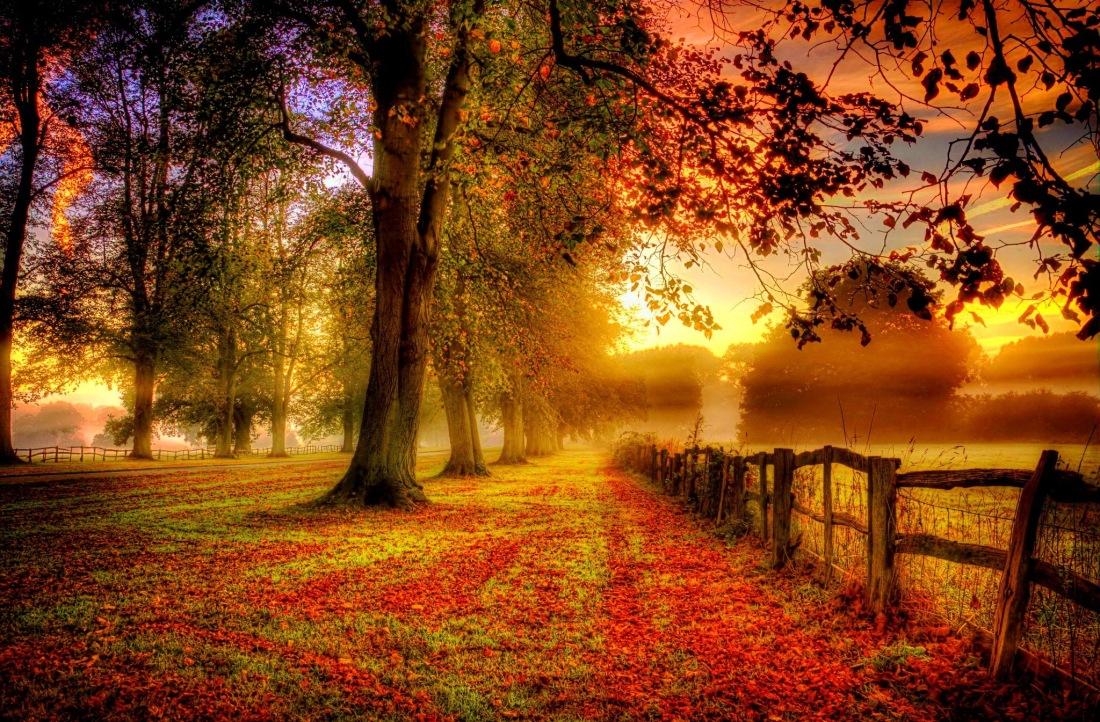 Autumn-patterns